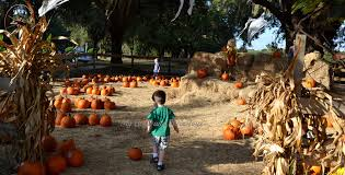 Pumpkin Patch Colorado Springs Woodmen by Colorado Pumpkin Patches Corn Mazes Hayrides And More