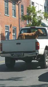 Safety Harness For Dog To Ride In Pickup Truck Bed Steps With Dog ... Ultra Flex Tonneau Cover Bedrug Truck Bed Liner Amp Power Steps By Bestop Best Products For 2019 Motoroso Side Step Retractable Styleside 65 Passenger Only Wood Flatbed Pickup Truck Mailordernetinfo Video A 9step Installation Guide Decked Storage Hitch Stair With 2 Trailer Hitches Camping Research Official Home Of Powerstep Bedstep Bedstep2 Dump Beds Norstar Nfab Asj0764 Textured Adjuststep Wheel To Wheelbed Access Amazoncom 7531001a Bedstep Bumper Brophy Camper Scissor 4 Steel Diamond Tread 17