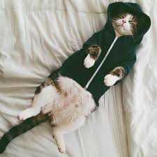 cat hoodies sleeping cat in a hoodie pictures photos and images for cat