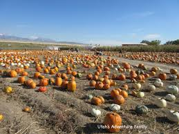Pumpkin Patch Rides by Petersen Family Farm Pumpkin Patch Utah U0027s Adventure Family