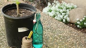 Homemade Automatic Christmas Tree Waterer by How To Make Your Own Self Watering Pot Build Com 30 Second Tip