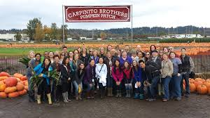 Bellevue Wa Pumpkin Patch by Photo Gallery Pumpkin Patch Carpinito Brothers