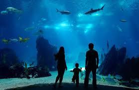 grand aquarium de malo nuit insolite dormez avec les requins au cœur du grand aquarium