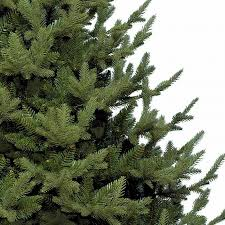 8 Ft Mountain Pine Artificial Christmas Tree by Bayberry Spruce Christmas Tree Christmas Lights Decoration