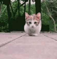 munchkins cats munchkin cats album on imgur