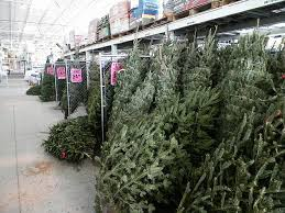 Menards In Sedalia Has A Selection Their Home Garden Section Varieties Are Fraser Balsam Fir White Pine Tree Scotch Along With