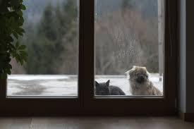 katzenklappe in glastür einbauen darauf ist zu achten