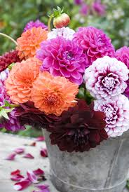 Varieties Of Pumpkins Uk by 50 Best Types Of Flowers U2013 Pretty Pictures Of Garden Flowers