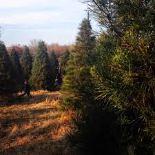 Ge Fraser Fir Christmas Tree by Pallet Christmas Tree Part 2