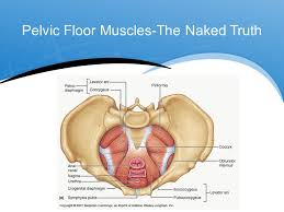 Hypertonic Pelvic Floor Muscles by The Uptight Pelvic Floor Ppt Video Online Download