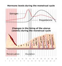 Uterus Lining Shedding Period by How Does The Menstrual Cycle Work Informedhealth Org