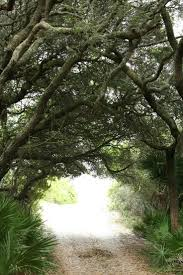 114 Best Cumberland Island Images On Pinterest | Cumberland Island ... Cumberland Farms Eyes Volusia With Higherend Stores Business Successful Recruitment In A Week Teach Yourself By Nigel Bookstore County College Kitchen Scandals Riverside Trilogy 2 Brooke Tyler Texas Restaurants Cafes Diners Grills Delis And Other Ding In Norwalk Big Boxes Dont Stay Empty For Long The Hour Happy Birthday Bixby Sean Hammer Bn Bncumberland Twitter University Vise Library Book Giveaway Crow Hollow Online Books Nook Ebooks Music Movies Toys Samsung Galaxy Tab A 7 Barnes Noble 9780594762157