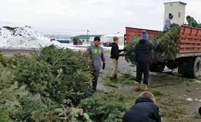 Chicago Christmas Tree Recycling by Christmas Tree Removal Aberdeen Beatiful Tree