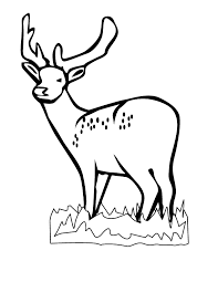 Deer Coloring Pages Art Galleries In Head