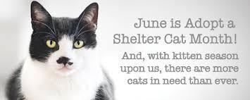 adopt a cat celebrating national adopt a shelter cat month cascades humane