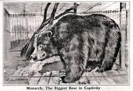 Drawn Grizzly Bear California Flag 1880092