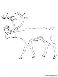 Caribou Printable Page To Color