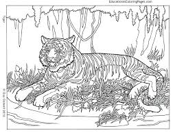 Cool Animal Coloring Pages Hard
