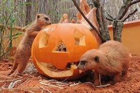 Pumpkin Patch Miami Lakes by Halloween Happenings Get Spooked At Events Across Miami Dade
