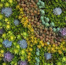 Colors Green S Outdoor Spaces Living Wall Art Succulents Succulent Staggering Frame Diy Uk Instructions