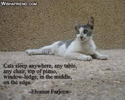 cat quotes best cat quotes