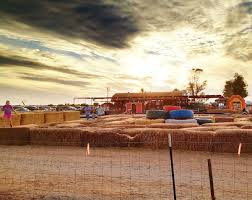 Pumpkin Patch Power Rd Mesa Az by Find Corn Mazes In Mesa Arizona Vertuccio Farms In Mesa Arizona