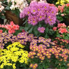 Knollwood Garden Center and Landscaping Flowering Indoor Gift Plants