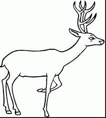 Astounding Printable Deer Coloring Pages With Page And Antler