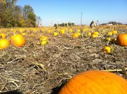Pumpkin Patch North Austin Tx by The 10 Best Pumpkin Patches In Indiana To Visit In 2016