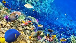 Beautiful coral reef wallpapers coral reef deskto  Collections