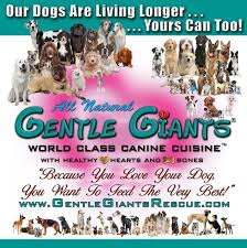 Why Is My Italian Greyhound Shedding by Italian Greyhounds At Gentle Giants Rescue And Adoptions