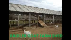BROILER GOAT SHED ,INDIA - YouTube Wwwaaiusranchorg Wpcoent Uploads 2011 06 Runinshedjpg Barns Menards Barn Kits Pole Blueprints Pictures Of Best 25 Barn Plans Ideas On Pinterest Floor Plan Design For Small And Large Equine Hospitals Business Horse Barns Dream Farm Cattle Plan 4 To Build 153 Plans Designs That You Can Actually Build Ideas 7 Stall Garage Shop Building Cow Shed And Modern House Ontario Feeders Functionally Classified Wikipedia