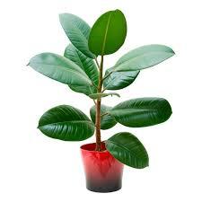 Small Green Succulent Artificial House Plants Ceramic Pots