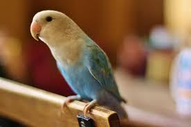 Parrot Caught Singing Bodies Hit The Floor by Symptoms Of Pet Bird Sickness