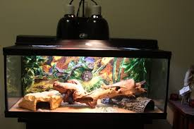 Bearded Dragon Heat Lamp Went Out by New Owner Confused On Lighting U2022 Bearded Dragon Org
