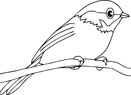 Bird Coloring Pages Perched