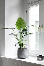 Pot Plants For The Bathroom by Urban Jungle Eye Catcher Op De Vensterbank In Betonnen Pot