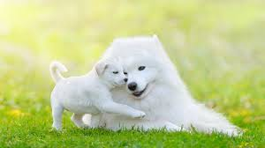 Quiet Small Non Shedding Dog Breeds by Got Allergies These Hypoallergenic Dog Breeds Are Your New Best