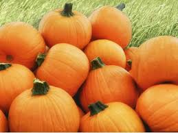 Alameda Pumpkin Patch 2015 by Upcoming Fall Festivals Halloween Events In East Bay Berkeley