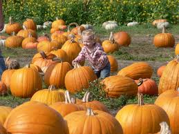 Kc Pumpkin Patch Winery by Get Away For A Fall Festival This Year Taking The Kids