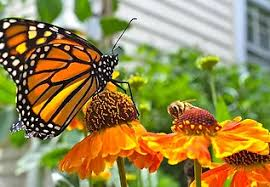 Attracting Insects To Your Garden by Oaklands Nursery Plant U0026 Garden Centre Attracting Wildlife To