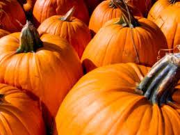 Pumpkin Patch In Homer Glen Illinois by Pumpkin Patches Corn Mazes Fall Festivals Around The North Shore