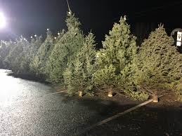 Image May Contain Outdoor And Nature Christmas Tree