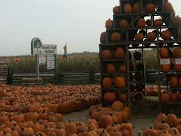 Michigan Pumpkin Patch Apple Orchard by County Line Orchard Hobart In 46342 Orchards In Northwest