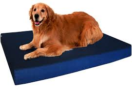 Serta Orthopedic Dog Bed by The Very Best Dog Beds For Large Dogs Rover Com