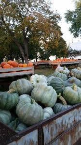Best Pumpkin Patch Des Moines by 67 Best Howell U0027s Pumpkin Patch Images On Pinterest Pumpkin