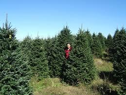 Big Johns Christmas Trees