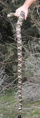 best 25 walking sticks ideas on pinterest walking sticks for
