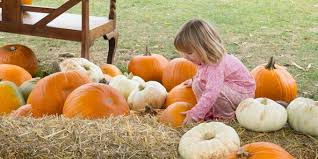Napa Pumpkin Patch Hours by 12 Missouri Pumpkin Patches That Will Make You Ready For Fall