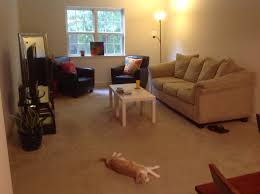 Ideas For Rugs To Layer Over Living Room Carpet